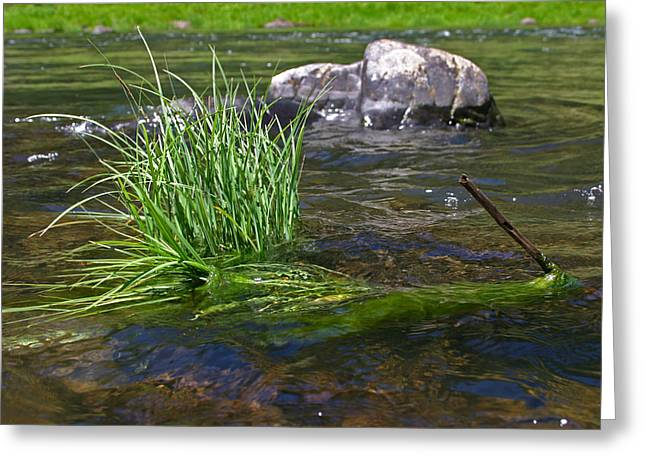 Grass Rock Stick Greeting Card