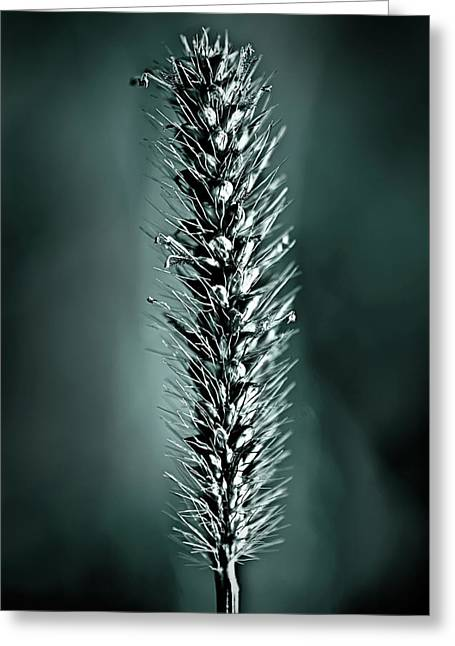 Grass Seedhead In Deep Cyan Greeting Card
