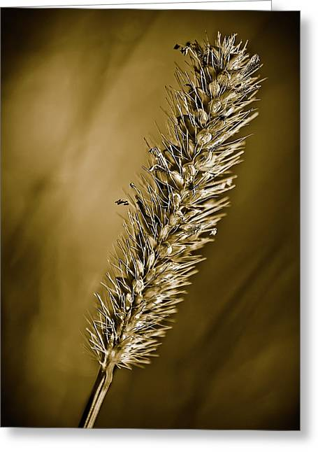 Grass Seedhead Greeting Card by  Onyonet  Photo Studios