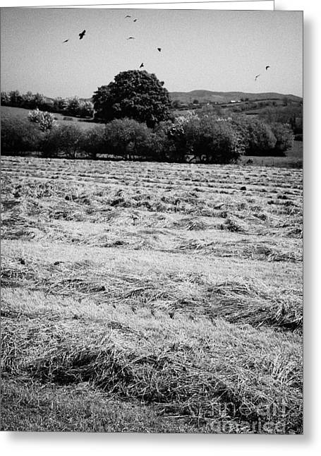 Grass Silage Sileage Making In A Field In Ireland Greeting Card