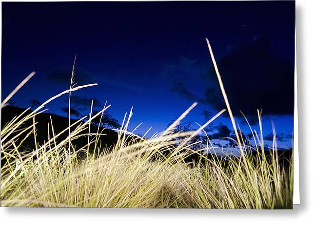 Grasses Greeting Card by Dexter Fassale