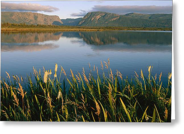Grasses Grow Along The Edge Of A Lake Greeting Card