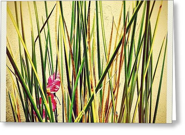 Grasses Greeting Card