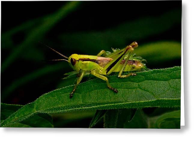 Grasshopper 1 Greeting Card