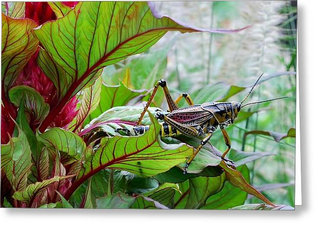 Grasshopper Greeting Card