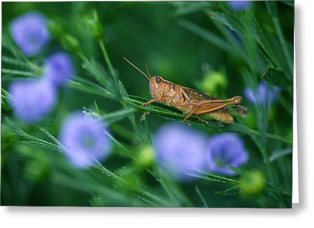 Grasshopper Greeting Card by Mike Grandmailson