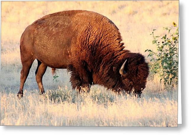 Grassland Giant Greeting Card by Bob Bahlmann