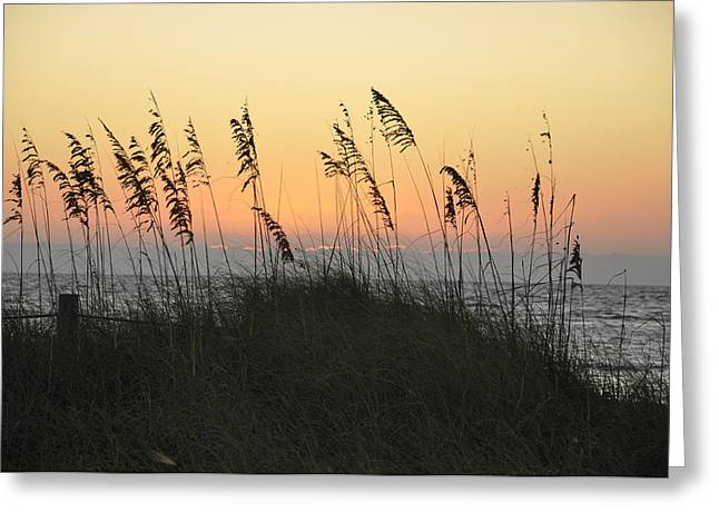 Grassy Sunset Greeting Card