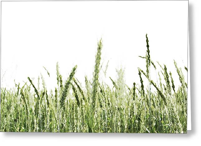 Grassy Greeting Card
