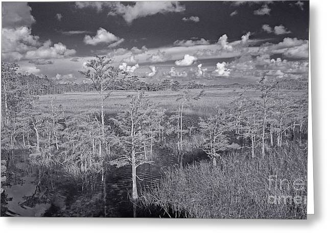 Greeting Card featuring the photograph Grassy Waters 3 Bw by Larry Nieland