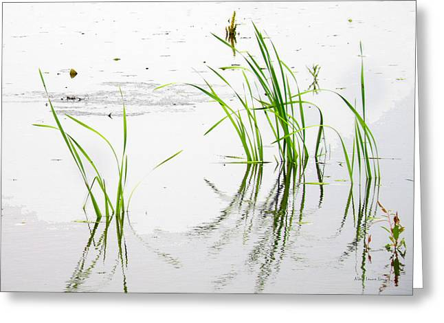 Grassy Waters Greeting Card by Albert Stewart