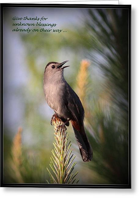 Gray Catbird - Indian Saying - Give Thanks... Greeting Card by Travis Truelove