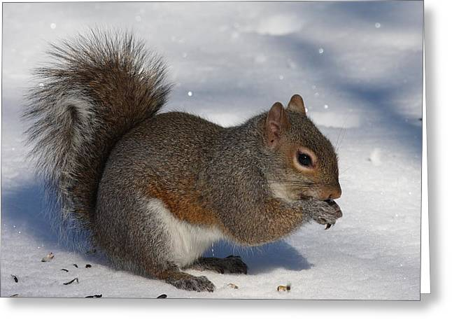 Gray Squirrel On Snow Greeting Card