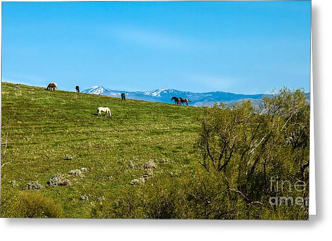 Grazing Horses Greeting Card by Robert Bales