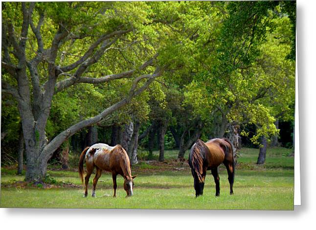 Grazing Pair Of Horses Greeting Card