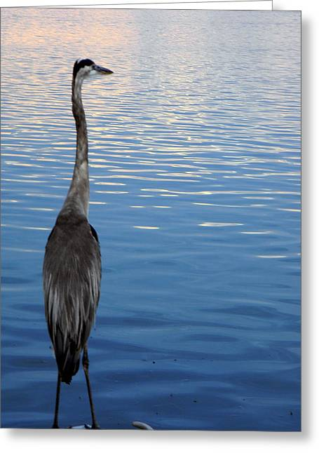 Great Blue Greeting Card by Christy Usilton