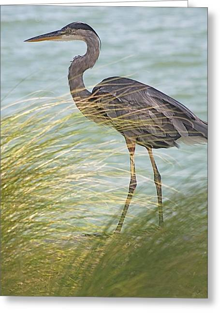 Great Blue Heron And Grass Greeting Card