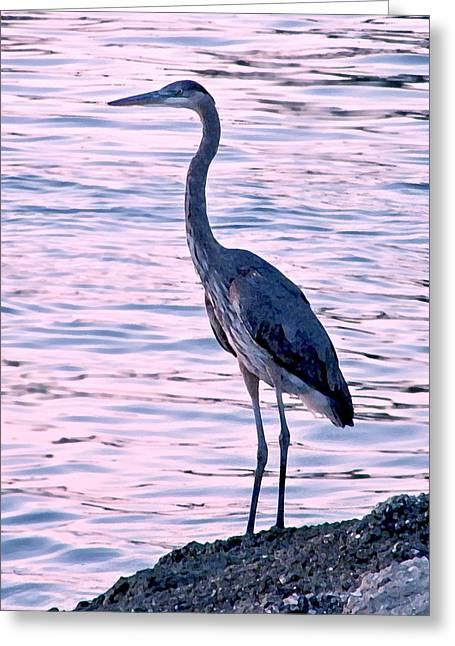 Greeting Card featuring the photograph Great Blue Heron by Brian Wright