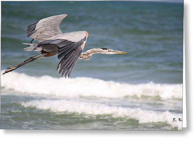 Great Blue Heron In Flight Greeting Card by Roena King