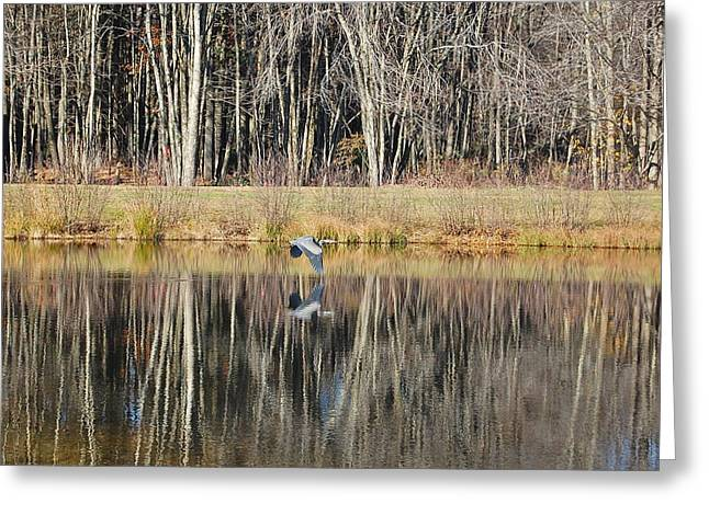 Great Blue Heron In November Greeting Card