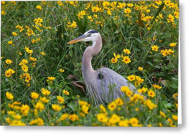 Greeting Card featuring the photograph Great Blue Heron In The Flowers by Myrna Bradshaw