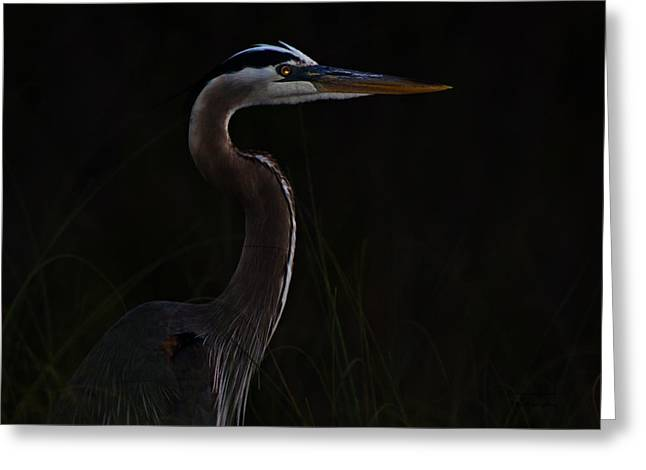 Great Blue Heron In The Sea Oats Greeting Card by Dorothy Cunningham