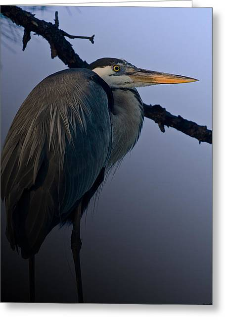 Great Blue Heron In The Tree Greeting Card by Dorothy Cunningham