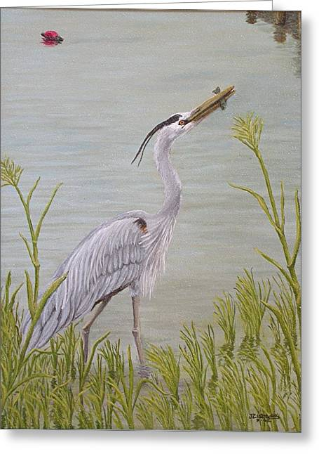 Great Blue Heron Greeting Card by Jim Ziemer