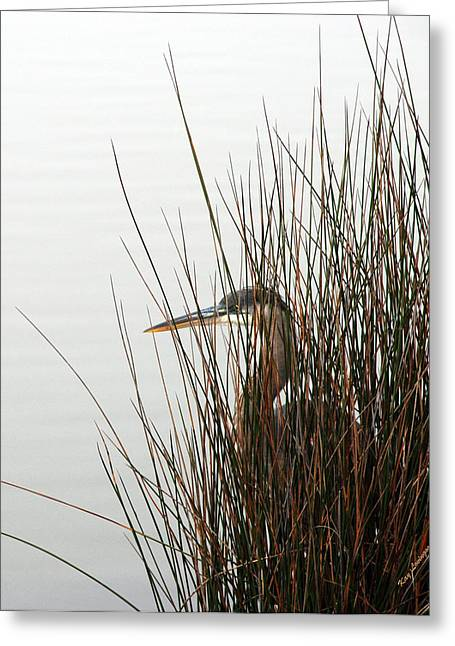 Kay Lovingood Greeting Cards - Great Blue Heron Greeting Card by Kay Lovingood