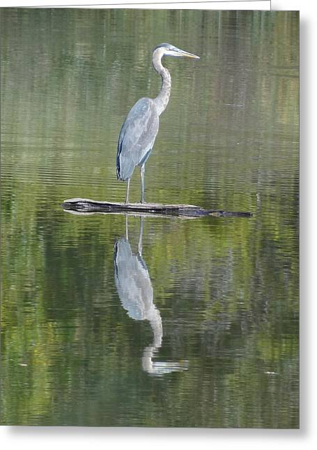 Great Blue Heron On Lake Chipican Greeting Card