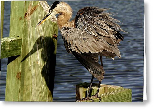 Great Blue Heron On The Block Greeting Card by Paulette Thomas
