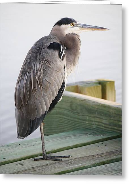 Great Blue Heron On The Dock Greeting Card by Paulette Thomas