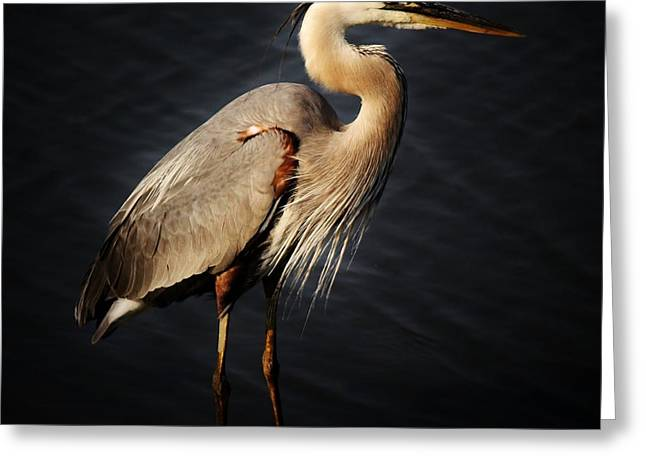 Great Blue Heron Greeting Card by Paulette Thomas