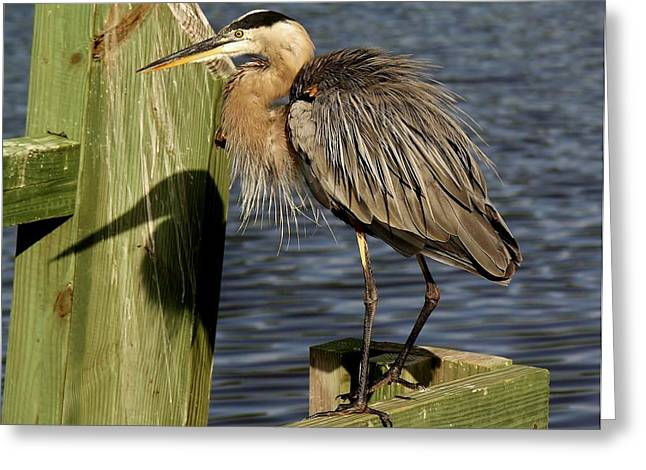 Great Blue Heron Shadow Greeting Card by Paulette Thomas