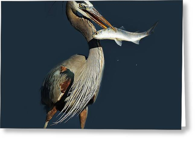 Great Blue Heron With Fish Greeting Card by Paulette Thomas