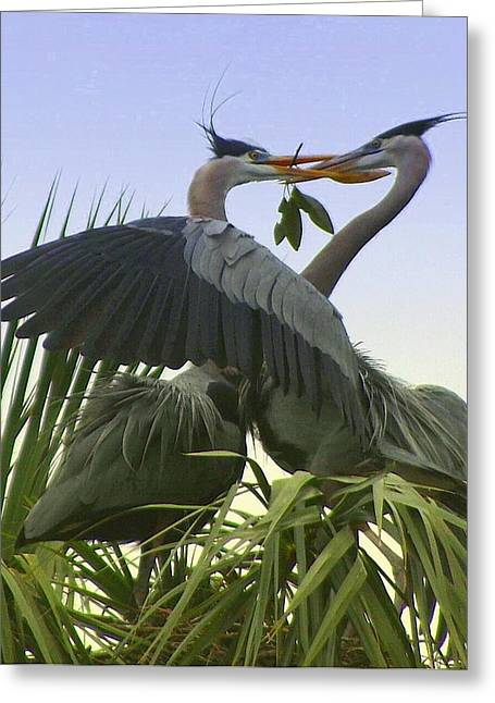 Greeting Card featuring the photograph Great Blue Herons by Myrna Bradshaw