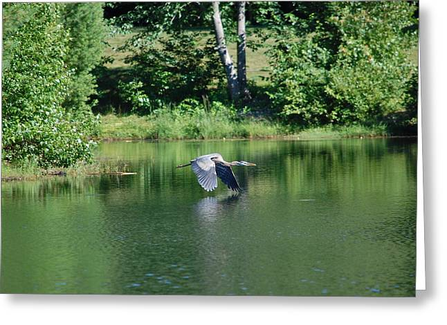 Great Blue Heron's World Greeting Card