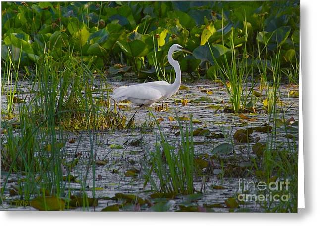 Great Egret 2 Greeting Card by September  Stone