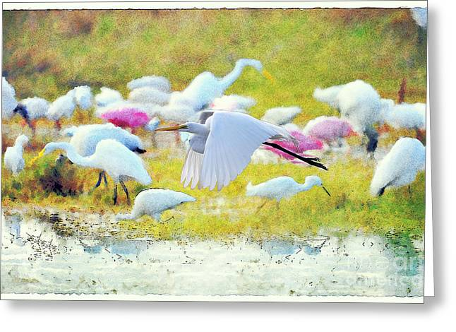 Greeting Card featuring the photograph Great Egret Flying by Dan Friend