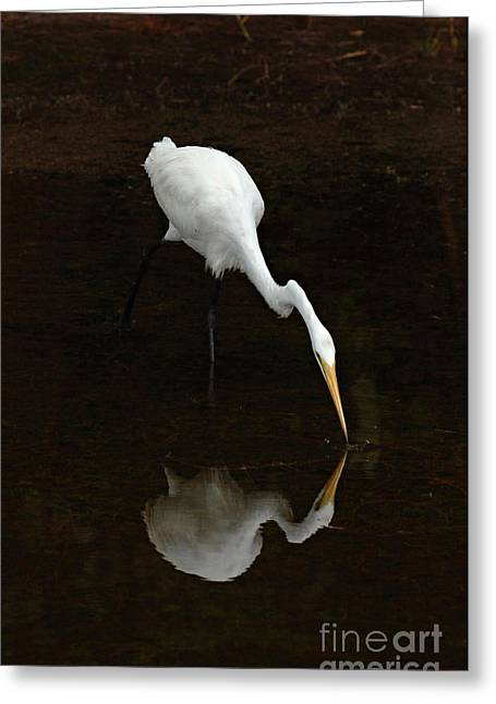 Great Egret Reflection Greeting Card by Bob Christopher