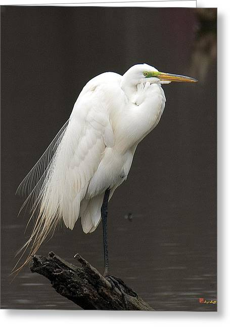 Great Egret Resting Dmsb0036 Greeting Card