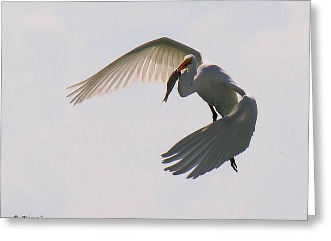 Great Egret Successful Fishing Greeting Card by Roena King