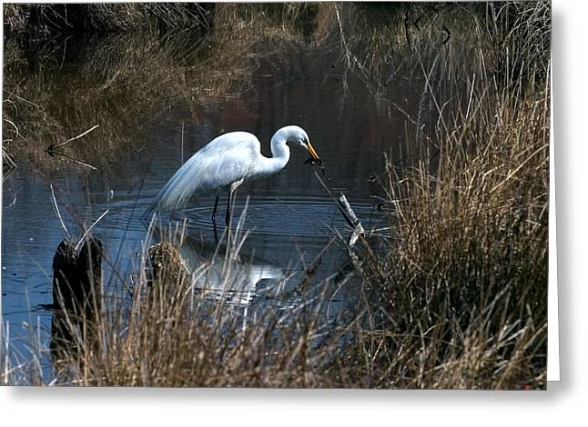 Greeting Card featuring the photograph Great Egret With Fish Dmsb0034 by Gerry Gantt