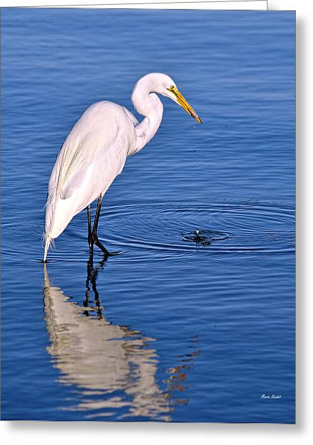 Great Egret With Shrimp Greeting Card