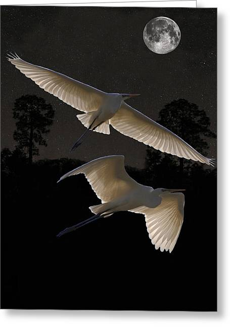 Great Egrets In Flight Greeting Card
