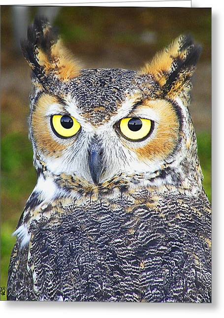 Great Horned Owl Greeting Card by Barbara Middleton