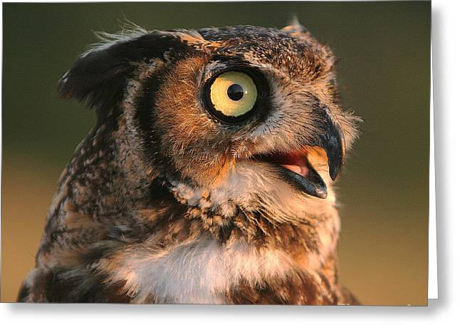 Great Horned Owl Greeting Card by Clare VanderVeen