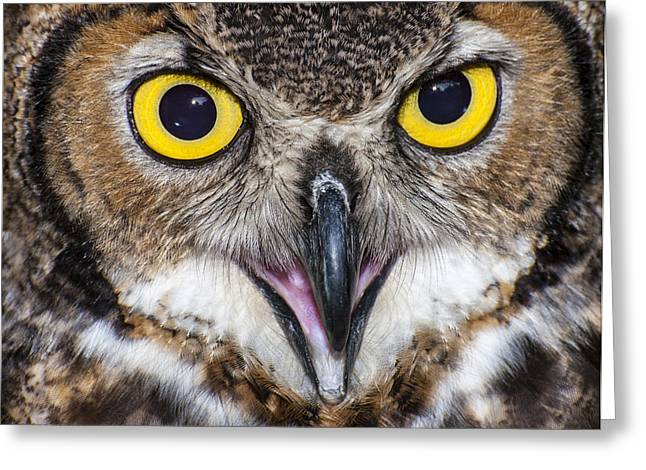 Great Horned Owl Close Up Greeting Card by Ray Downs