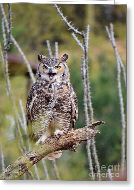 Great Horned Owl Greeting Card by Donna Greene