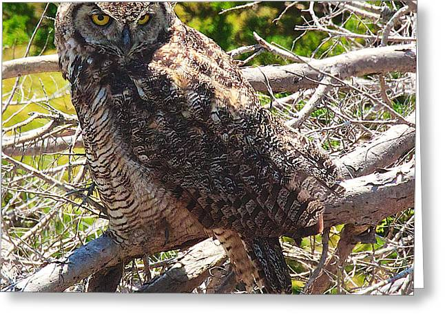 Great Horned Owl Greeting Card by Joe Urbz